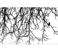 Bird Silhouette Photographic Print