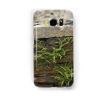 Spleenwort Maidenhair fern on wall at Cashelnagor Samsung Galaxy Case/Skin