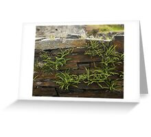 Spleenwort Maidenhair fern on wall at Cashelnagor Greeting Card