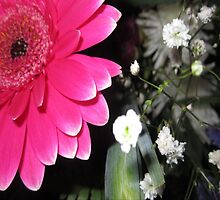 SMILING PINK PETALS by Colleen2012