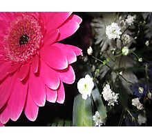 SMILING PINK PETALS Photographic Print