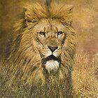 Lion Stalking Prey by Tarrby