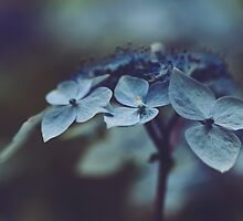 Hortensia by Mary Parker