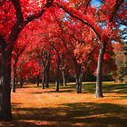 Autumnal Park 785714 by Ian McGregor