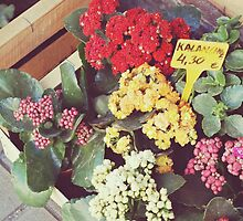Barcelona // Flowers in L'Eixample by vagabonnde