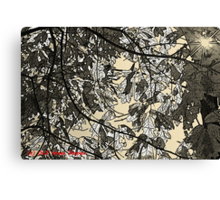Morning in the Oaks Canvas Print