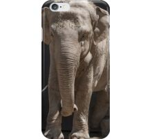 elephant at the zoo iPhone Case/Skin