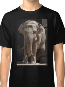 elephant at the zoo Classic T-Shirt