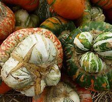 Turks Caps Gourd by WildestArt