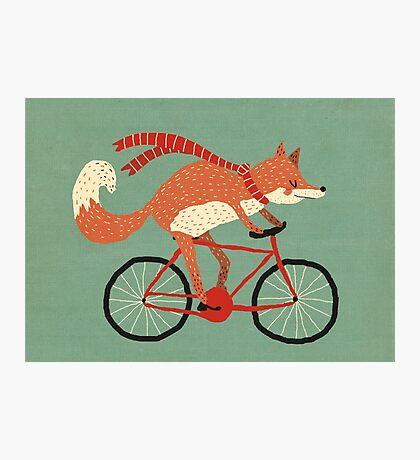 mr. fox Photographic Print