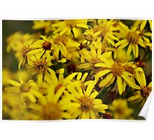 Yellow Flowers Middle Focus Poster