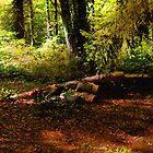 Autumn Dawn - East Haddam by RC deWinter