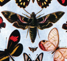 Collection of different butterflies Sticker