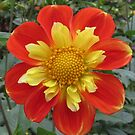 Incredible dahlia by bubblehex08