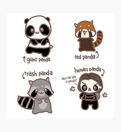 Four Pandas Photographic Print