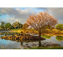 Reflective Pond Photographic Print