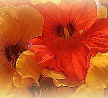 Nasturtium Macro by kkphoto1