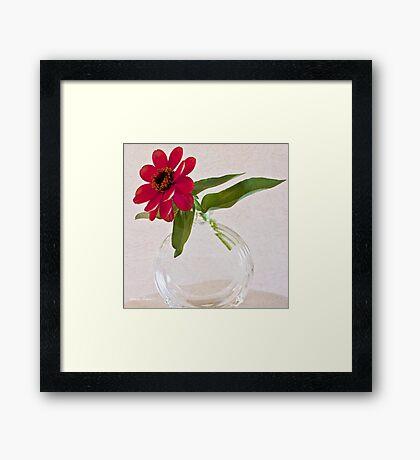 Single Pink Zinnia Blossom Framed Print