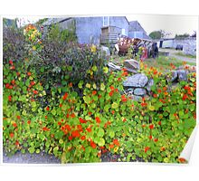 Stone Walls And Nasturtiums Poster