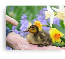 Why? Duckling Springs Flowers - NZ Canvas Print