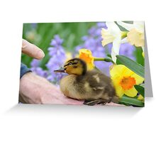 Why? Duckling Springs Flowers - NZ Greeting Card