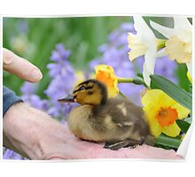Why? Duckling Springs Flowers - NZ Poster