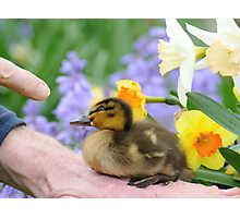 Why? Duckling Springs Flowers - NZ Photographic Print