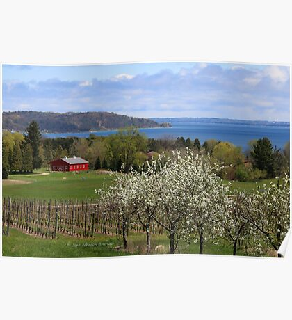 Old Mission Peninsula Cherry Blossoms Poster