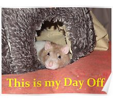 relaxed rat Poster