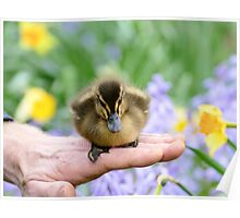 Spring Is Here!! - Duckling NZ Poster