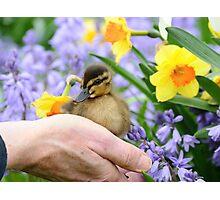 Loving Life! - Duckling NZ Photographic Print