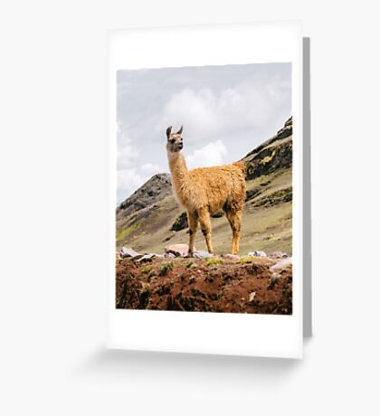 A Llama in the Andes outside of Cusco, Peru Greeting Card