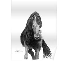Black Flowing Manes Poster