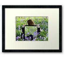 Spring Reflections - Christchurch Botanic Gardens Framed Print