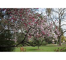Botanical Gardens Photographic Print