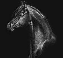 Arabian Horse Head Drawing by Anila Tac