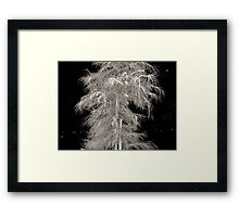 ghost of a tree Framed Print