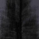 Norfolk Pine by John Douglas