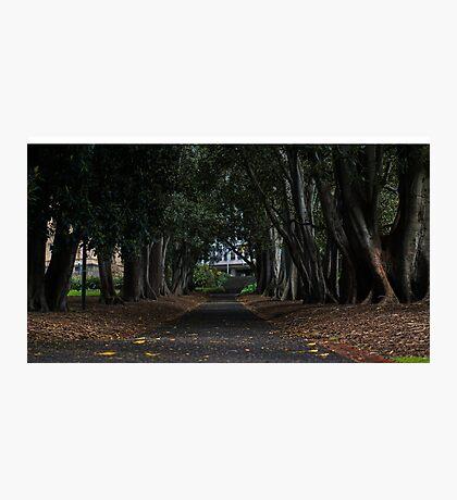 Spring Melbourne Park Photographic Print