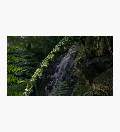 Waterfall and Fern Print Photographic Print