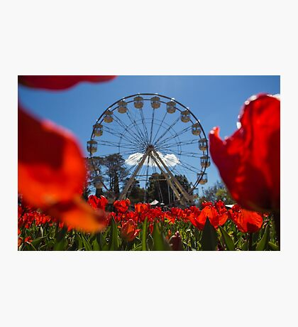 Floral Display - Canberra Photographic Print