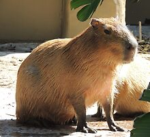 Capybara by ScenerybyDesign