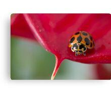 Ladybug on red flower Canvas Print
