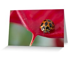 Ladybug on red flower Greeting Card