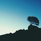 Lone Tree by Greg Tippett
