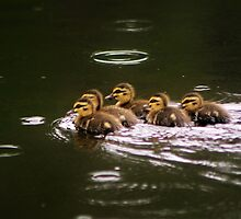 Ducklings in a Drizzle by Donuts