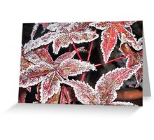 Autumn To Winter Greeting Card