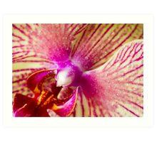 Orchid  rain drops Art Print