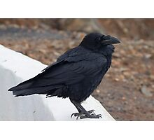 Raven perched on a ledge Photographic Print