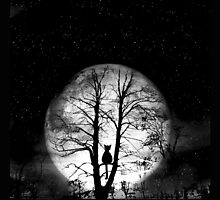 black cat full moon by studenna